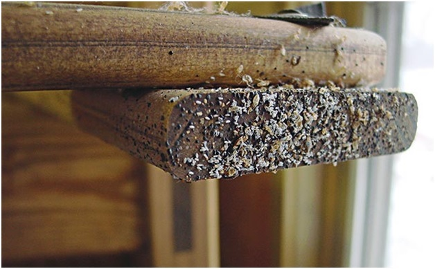 A bed bugs and bed bug eggs on wooden furniture