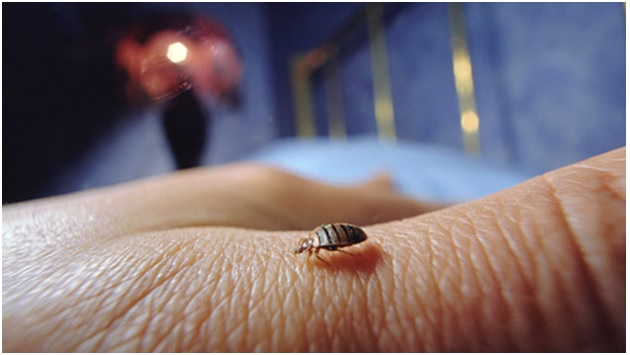 A bed bug on a sleeping person's skin