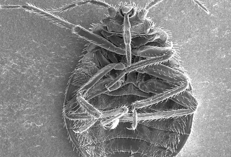 How Easily Do Bed Bugs Spread From House To House