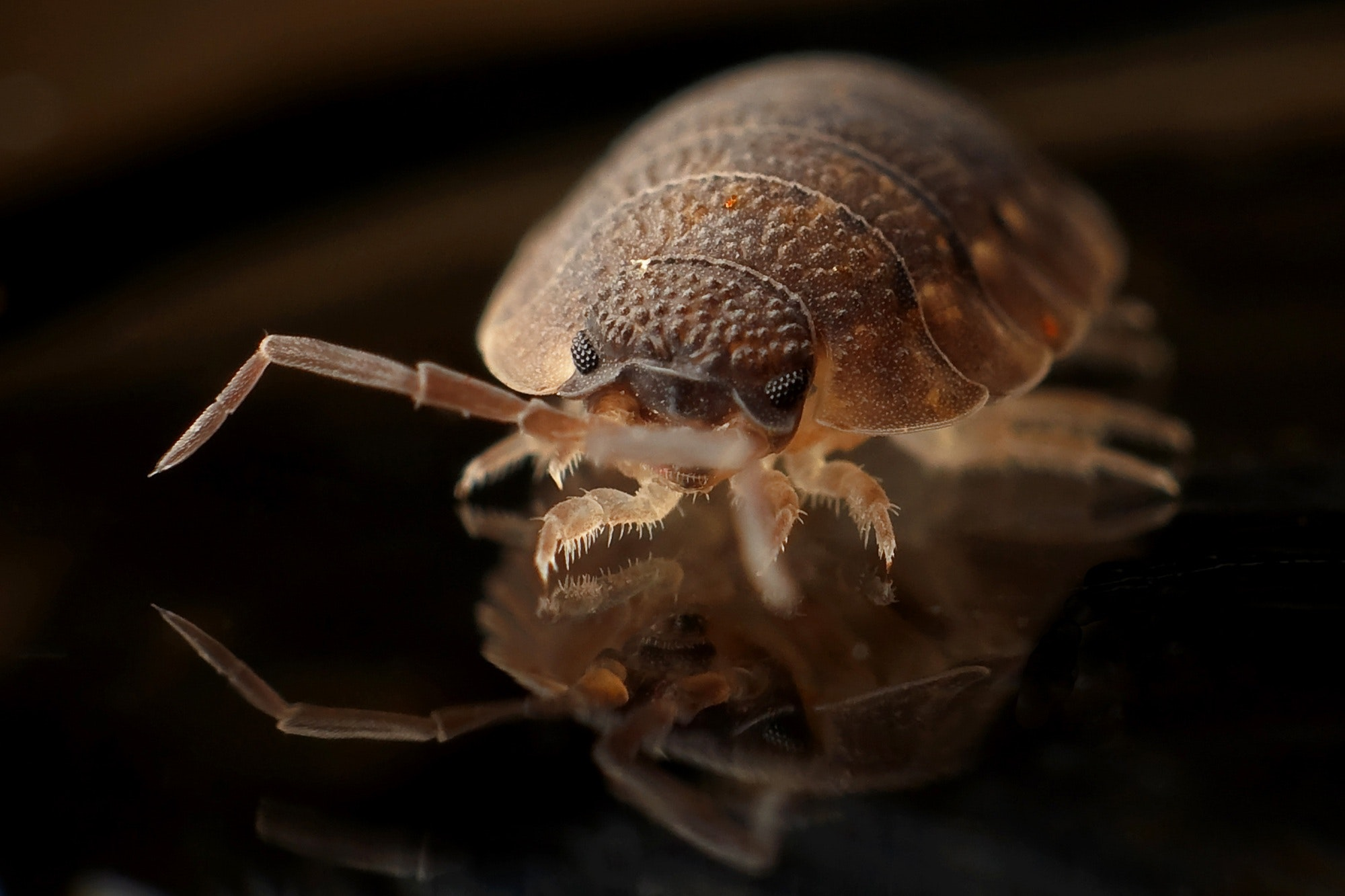 How Well Do Bed Bug Foggers Work